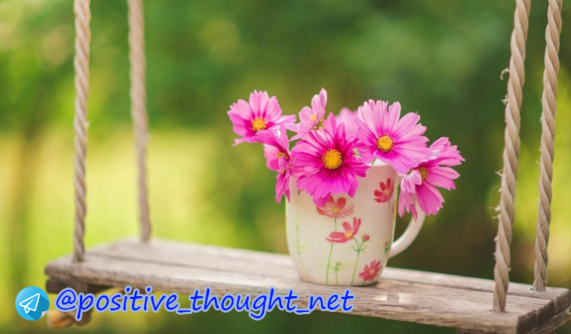 pretty_flowers_nature_swing_cup_beautiful_hd-11593930-874x492.jpg